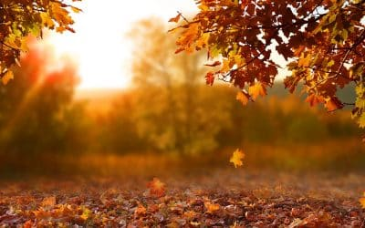 Thankfulness (a very personal blog)